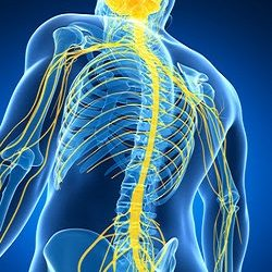Neurological-Rehabilitation-